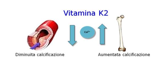 Potenziale ruolo della Vitamina K2 nell'ambito delle patologie cardiovascolari (aterosclerosi) ed ossee (osteoporosi).